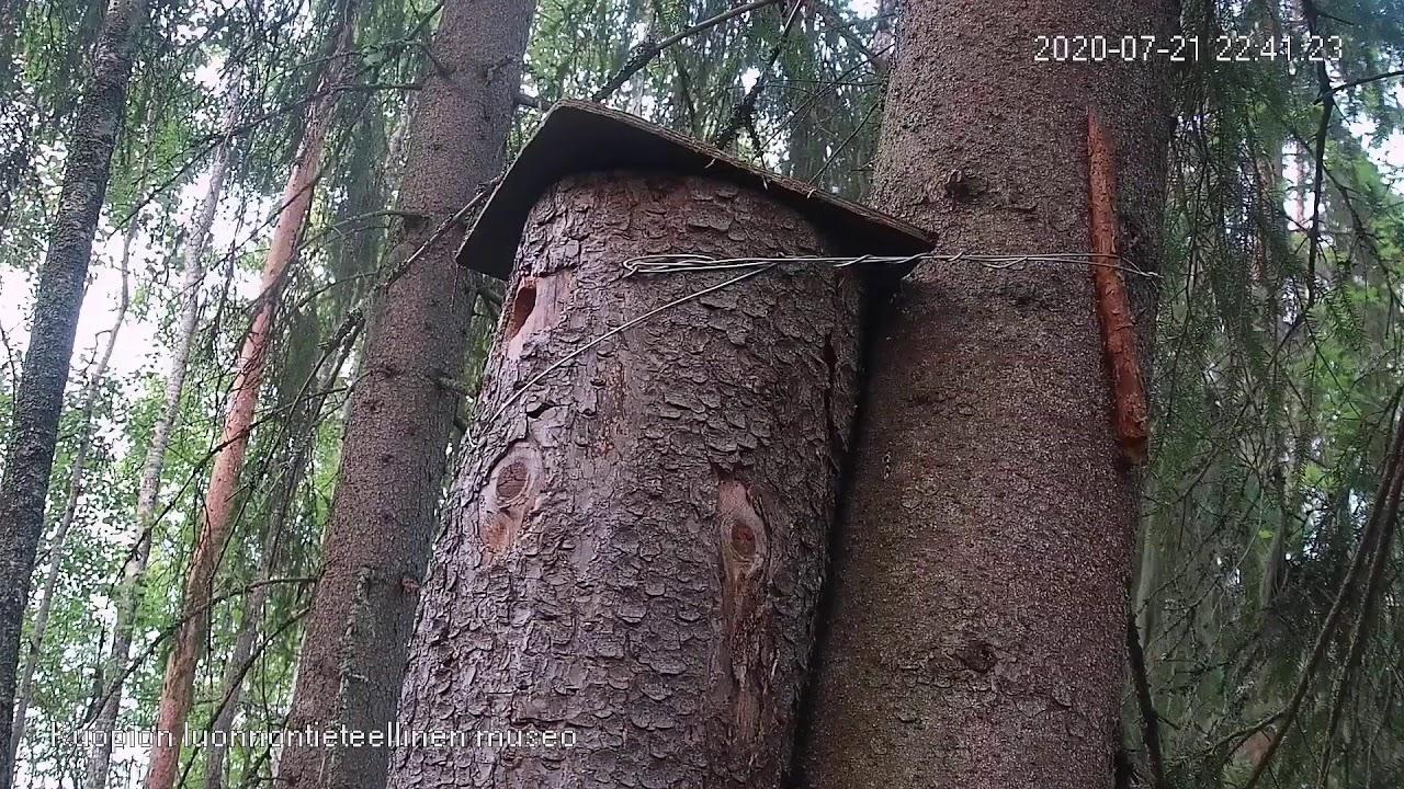 Oravan Pönttö
