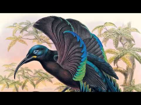 David Attenborough on Sharpe's Birds of Paradise | The Folio Society