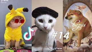BEST CAT AND DOG TIK TOKS # 14  Animal Tik Toks Compilation