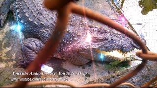 Thanh niên leo vào chuồng cá sấu và cái kết