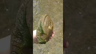 Searching for River Treasure #1