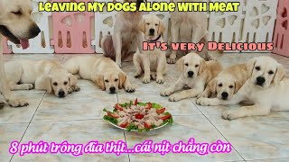 Thử thách cả gia đình Củ Cải cùng trông đĩa thịt khi Nô đi vắng | Leaving My Dogs Alone with Meat