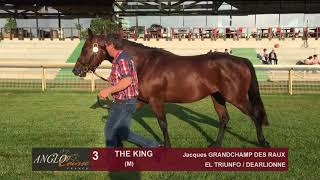 Show Anglo 2018 : Lot 3 - THE KING