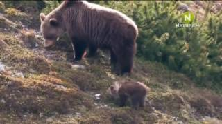 Дикая природа  Хранители  Мир животных Словакии  Документальный фильм