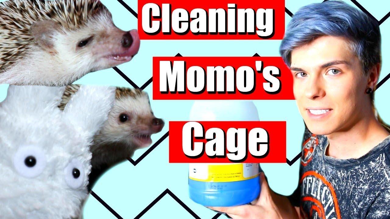 cleaning-my-hedgehog-cage-momo-being-cute
