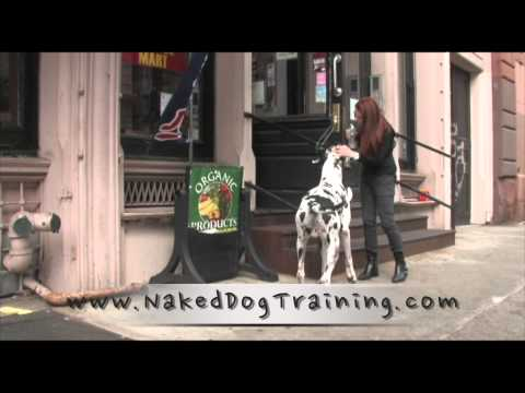 Naked Obedience by Naked Dog Training