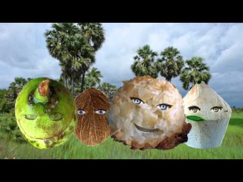 Little Coconut Song - Music Video