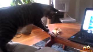 Смешные очень кошки Выпуск 3 Приколы