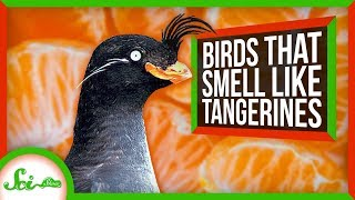 these-birds-smell-like-tangerines