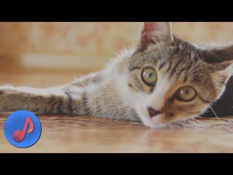 То-шик - Котёнок (Мяу) [НОВЫЕ КЛИПЫ 2018]