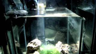 Biocube 29 Custom Diy Sump Refugium