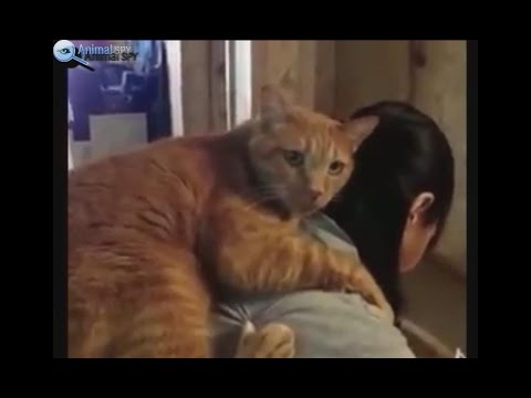 CUDDLY CATS - CATS ASKING FOR LOVE VIDEO COMPILATION