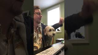 Work From Home  Pushy Dog