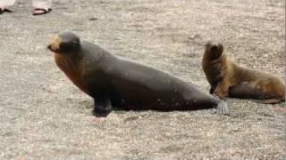 Sea Lion Mother & Pup
