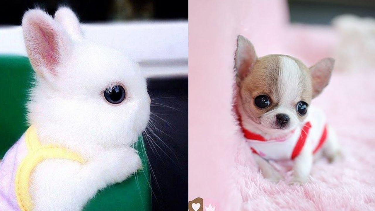 Cutest Animals! Cute baby animals Videos Compilation cute ...