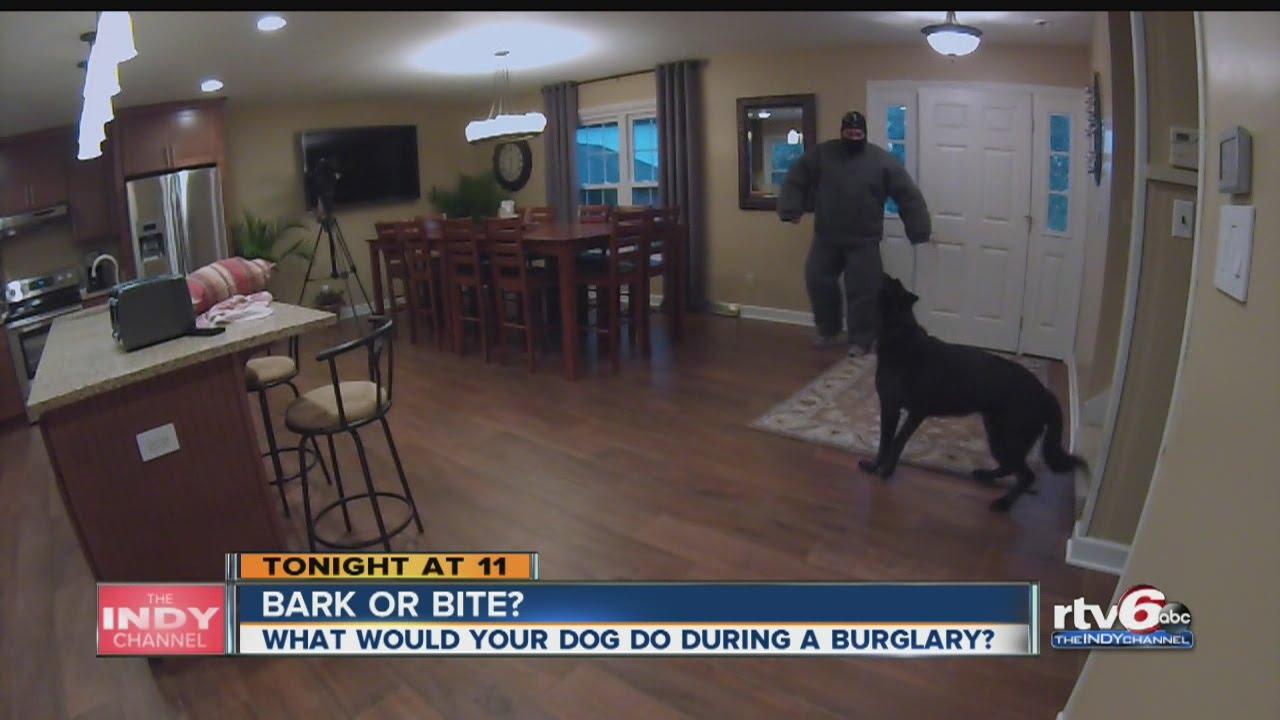 House Has Dog Gaurd