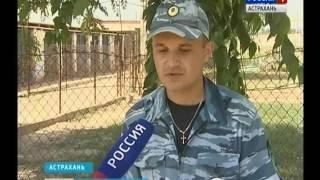Астраханские кинологи раскрыли секреты обучения служебных питомцев