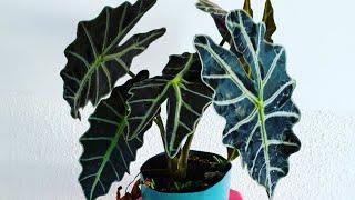 Três Plantas para Cultivar na Varanda