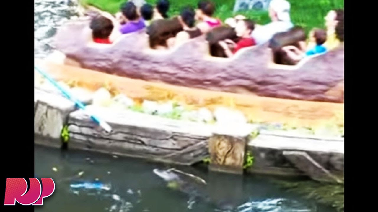 Disney World Workers Find Alligator By Splash Mountain Youtube