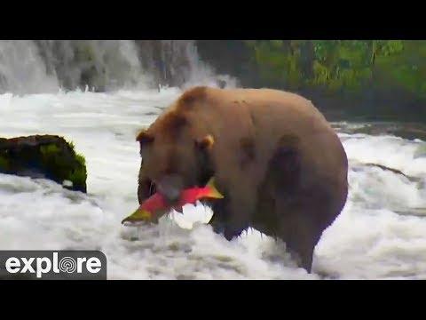 Brown Bear Shows Off Its Fishing Skills