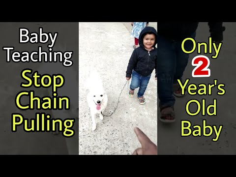 Dog learning - stop chain pull - with baby