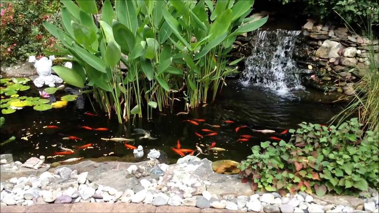 Backyard Goldfish Pond | www.pixshark.com - Images ...