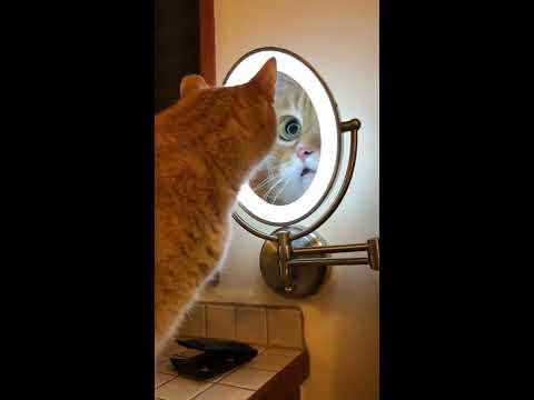 Big Eye Vanity Cat