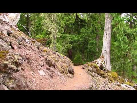 VIRTUAL HIKE #6C: Beautiful Forest to Waterfall - Actual Sounds 23min