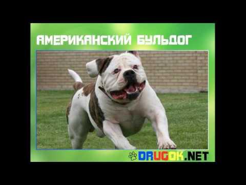 Аудиокнига белый клык in , Jun 11, 2017 -