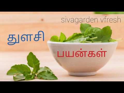 Thulasi Benefits