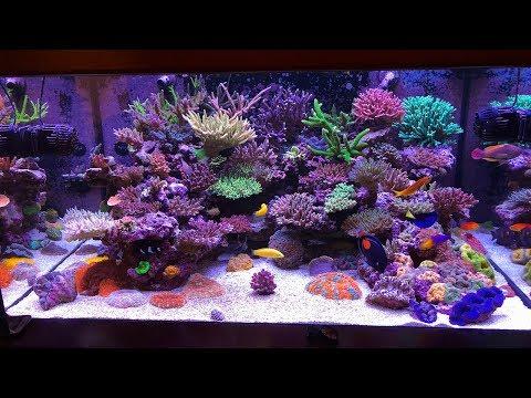 The Meticulous SPS Reef of Faisal Ali, Abu Dhabi