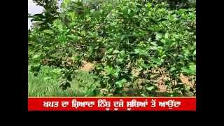 Punjab land fit for lemon farming