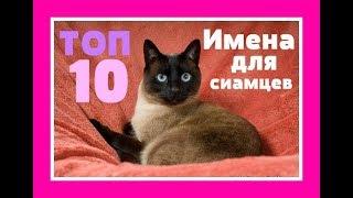 Клички имена для кота( кошки) Как назвать кота  Сиамский кот  Сиамская кошка