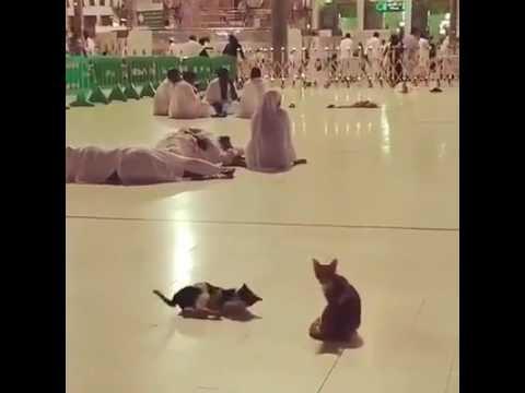 Cat wake up man in madina fajr azan