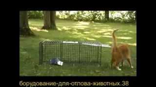Ловушка для кота от озж 'ВИТА'