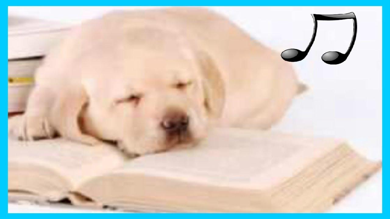 Nhạc thiết kế để thư giãn và ngủ chó bồn chồn, âm nhạc chó  🎵♫
