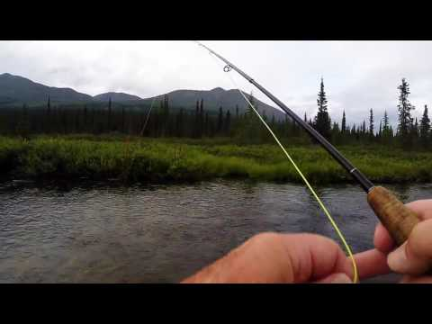 Fishing for Arctic Grayling on Fish Creek, Cantwell, Alaska