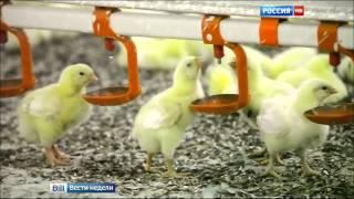 видео Деятельность транснациональной корпорации  «Nestle»