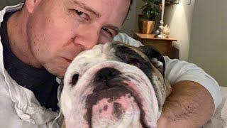 reuben-the-bulldog-where-s-dad