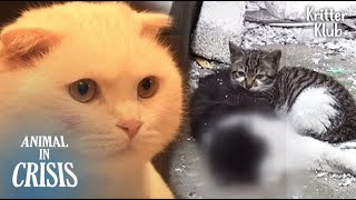 A New Cat Appeared To A Kitten Who Had Protected Her Dead Dad (Part 2) | Animal in Crisis EP116 thumbnail