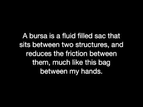 What is a bursa