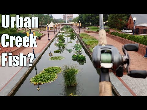 Fishing An URBAN Creek And Catching MYSTERIOUS Fish???