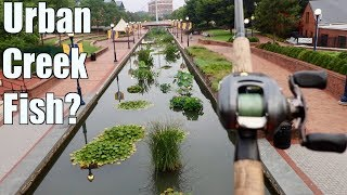 One of 1Rod1ReelFishing's most viewed videos: Fishing an URBAN Creek and Catching MYSTERIOUS Fish???