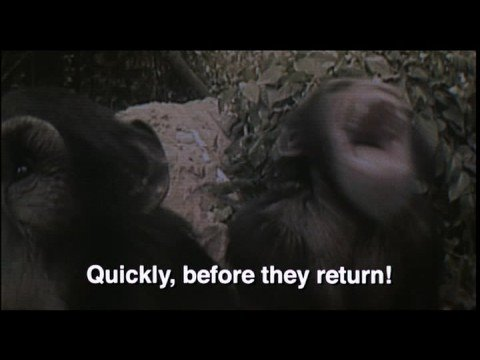 one clever chimp - YouTube