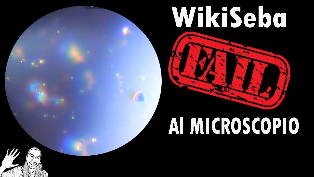 WikiSeba Fail al Microscopio | #AbrilVideosMil | 08