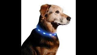 Illumiseen LED Dog Necklace Collar