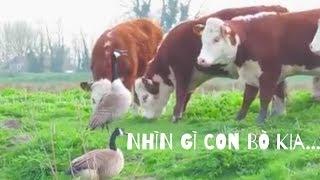 Hài động vật | Những động vật hài hước quanh ta.