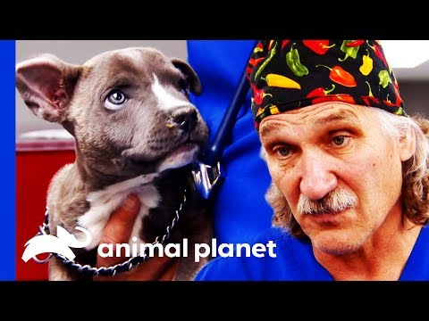 Can Dr Jeff Fix This Puppy's Cleft Palate? | Dr. Jeff: Rocky Mountain Vet