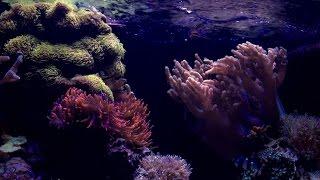 jbj 45 gallon rimless series finale recap tank breakdown   reef update