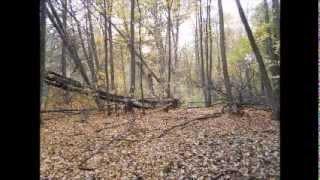 Secret hidden Polish WW2 forest graveyard